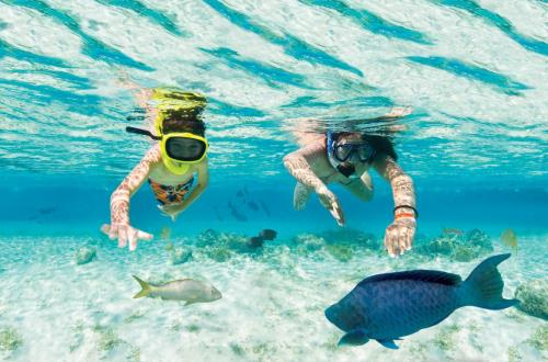 two kids snorkling in clear water with a large parrot fish