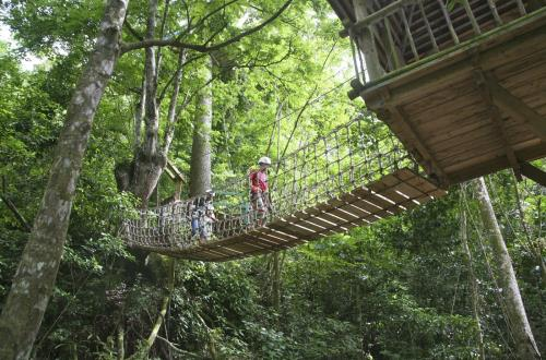 Canopy Tour & Challenge Course in Antigua