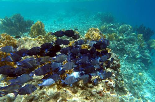Discover Scuba Diving in Bonaire