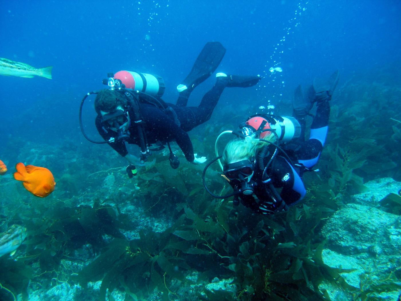 Discover Scuba Diving in Catalina Island, CA