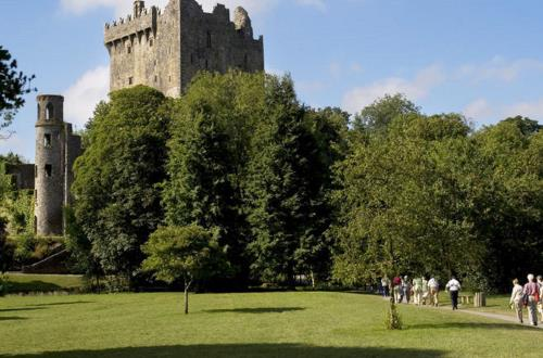 guests head towards a castle surrounded by vibrant tall trees