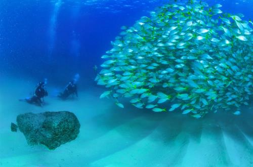 two guests scuba diving stop and admire a school of fish in cabo san lucas, mexico