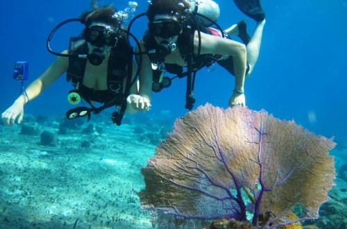 Beginner's Scuba Diving in Cozumel, Mexico