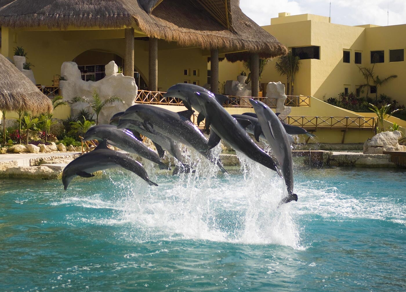 group of dolphins jump in the air performing stunts