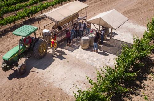 guests gather around a wine field to chat with one another