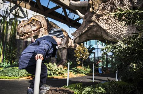 a child climbs on a rock and laughs while enjoying the dinosaur display in the museum