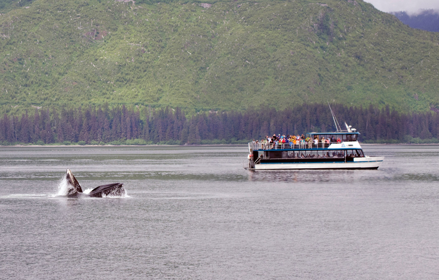 Whales Wildlife Bear Search