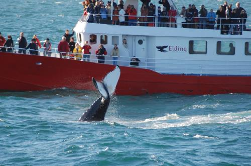 guests on a boat take photos of a whale tail coming out of the deep blue ocean