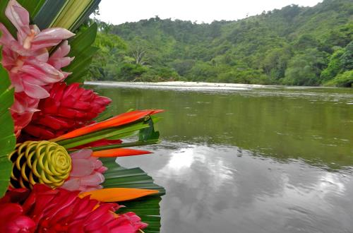 colorful flora with a backdrop of the water and tree filled mountain