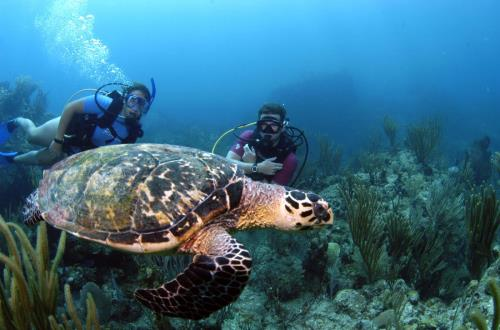 Certified Two Tank Wreck & Reef Dive in Tortola,British Virgin Islands