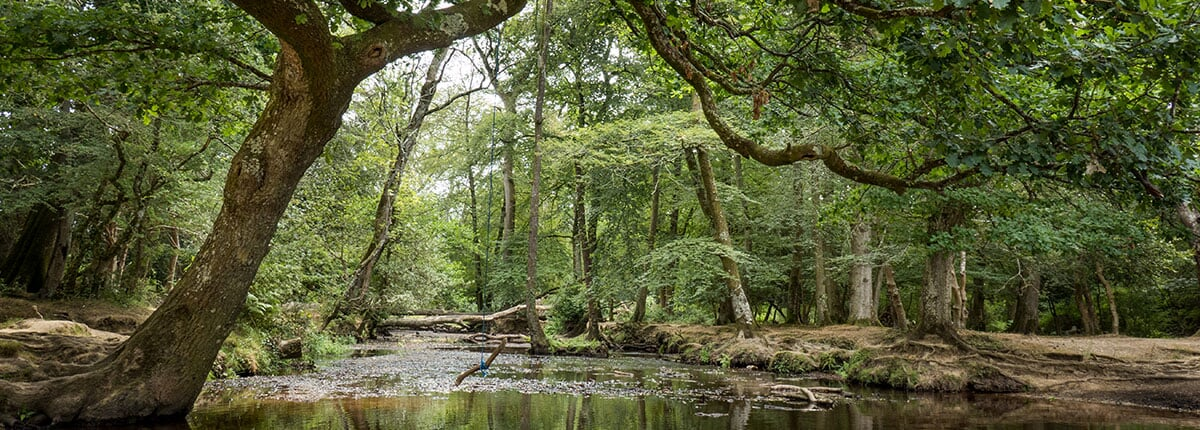 river in new forest nature park near southampton, england